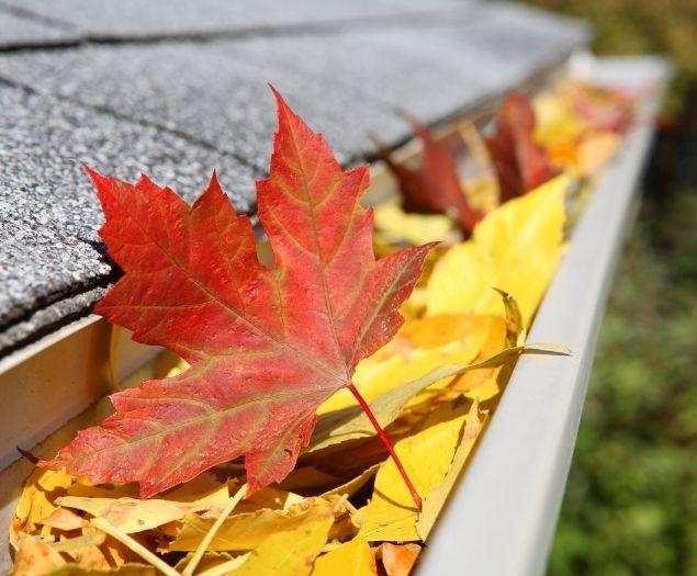 Fallen fall leaves in a gutter